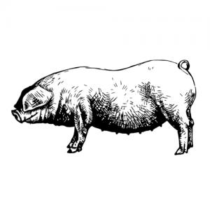 Free farmed pork - Drycreekmeats Boutique Online Butchery